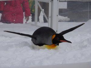 滑空するペンギン