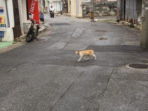 06野良猫