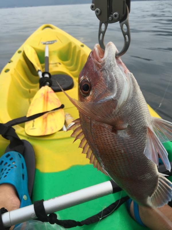 カヤックで魚を釣っているところ
